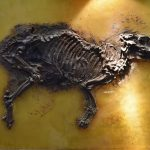 ゼンケンベルク自然博物館と化石の宝庫メッセル・ピット(Grube Messel)