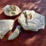 ジュラ紀の世界を覗こう 〜 ゾルンホーフェンで化石探し体験