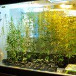 ベルリンのヘンプ博物館 (Hanf Museum Berlin)で大麻の利用史を知る